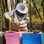 Ruches Lille apiculteur nord miel responsable écologique