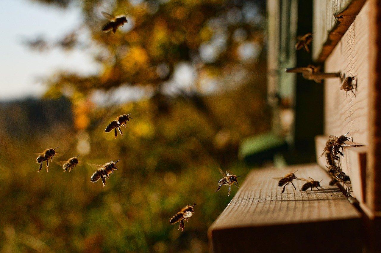 Apiculture ruches Nord Hauts-de-France