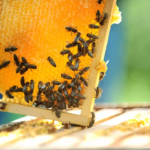 Apiculture ruches Nord bee to bee